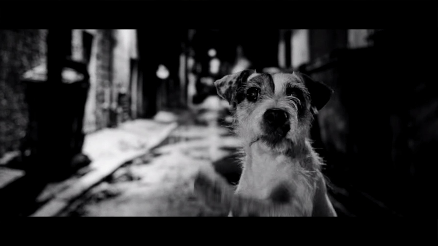 Herosz Shelters - Where the dogs don't cry.
